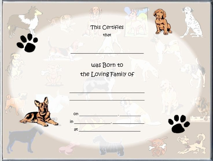 Dog Training Certificate Template Awesome 85 Best Raisin A Puppy Images On Pinterest