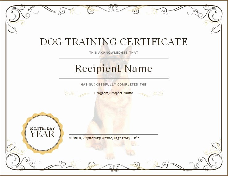 Dog Training Certificate Template Awesome Dog Training Certificate