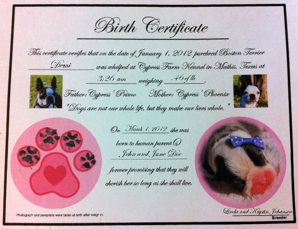 Dog Training Certificate Template Lovely Puppy Birth Certificates ]