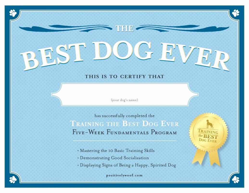 Dog Training Certificate Template New Service Dog Certificate Template