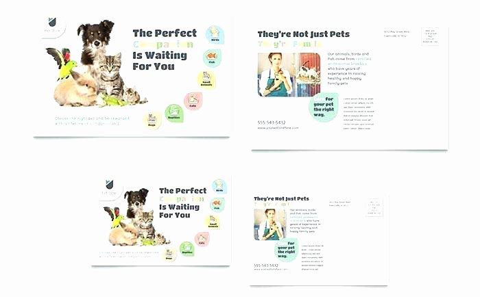 Microsoft Office Postcard Template Best Of Microsoft Office Postcard Template – Btcromaniafo