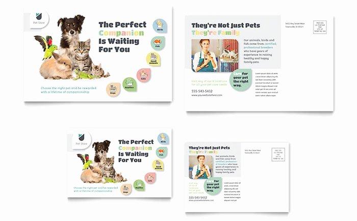 Ms Publisher Postcard Template Beautiful Pet Store Postcard Template Word & Publisher