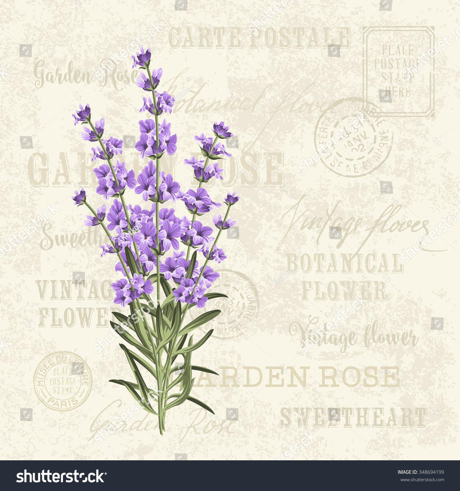 Postcard Wedding Invitations Template Best Of Lavender Elegant Card Vintage Postcard Background Stock