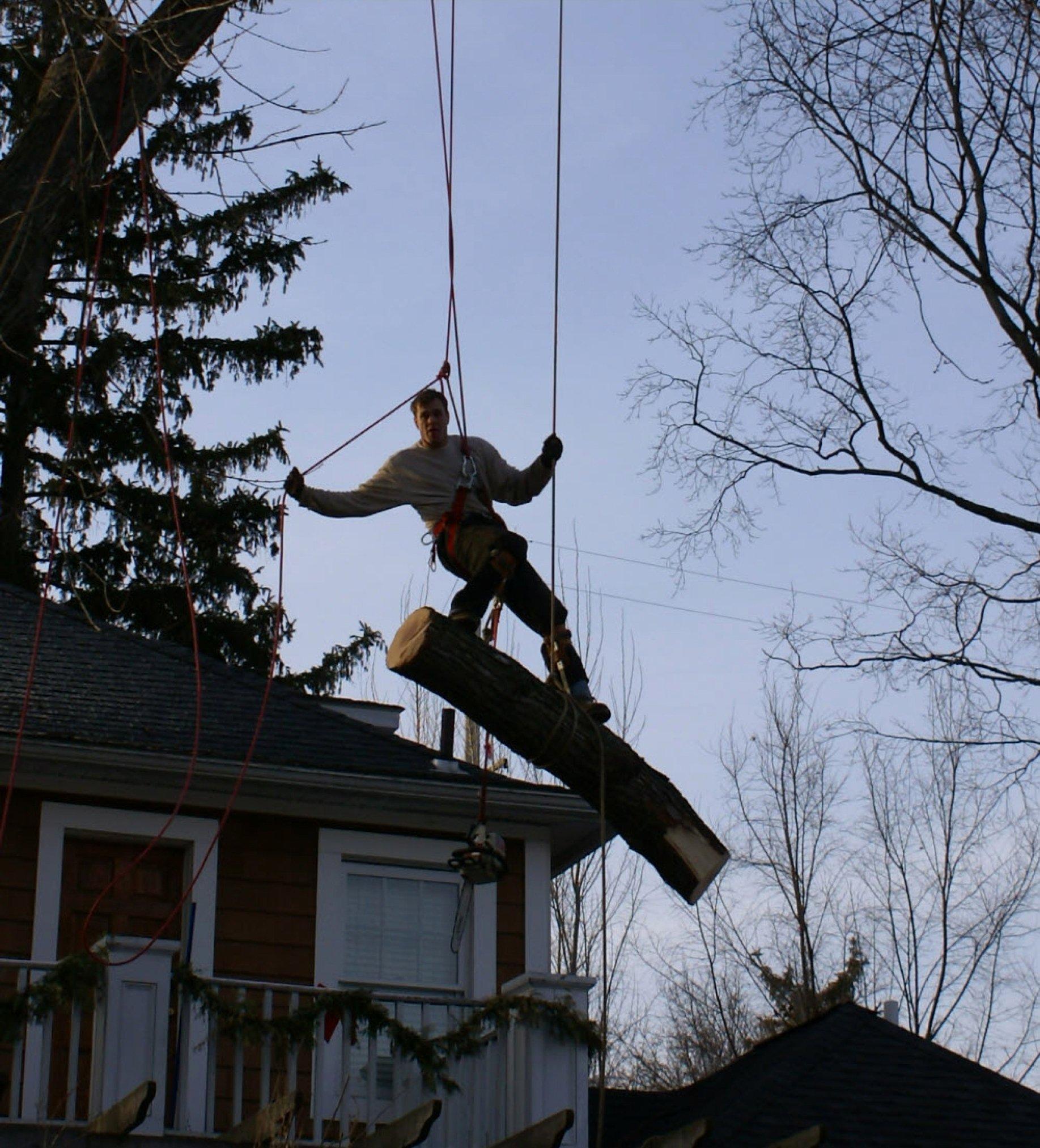 Tree Trimming Estimate Template Elegant Royal Oak Michigan Tree Service